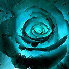 Himalayan Blue Rose by DeborahDinah