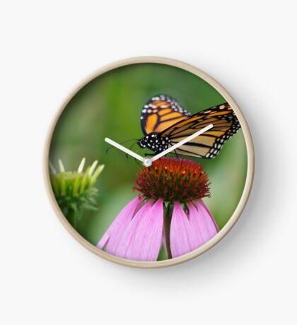 softly landing on an echinacea flower Clock