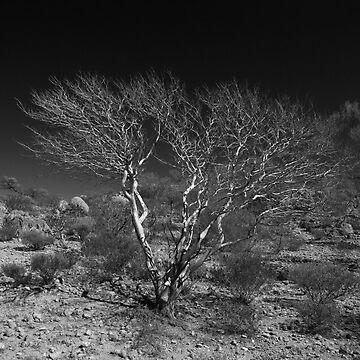 Outback Tree Acacia grasbyii minirichie B&W  by yallmia