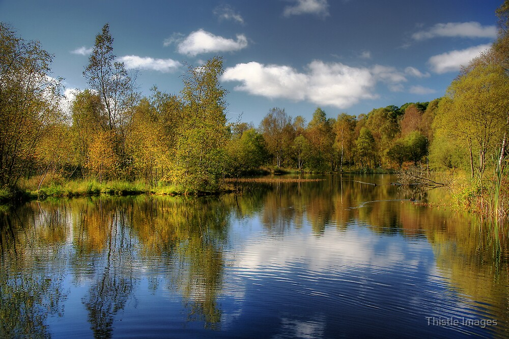Queen Elizabeth Pond Reflections by Thistle Images