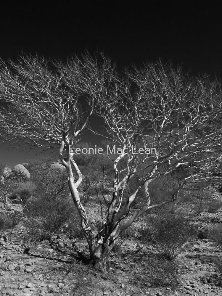 Outback Tree Acacia grasbyii minirichie, Black and white. by yallmia