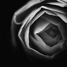 rose by Falko Follert