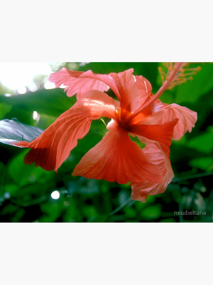 Red Tropical Flower by newbeltane
