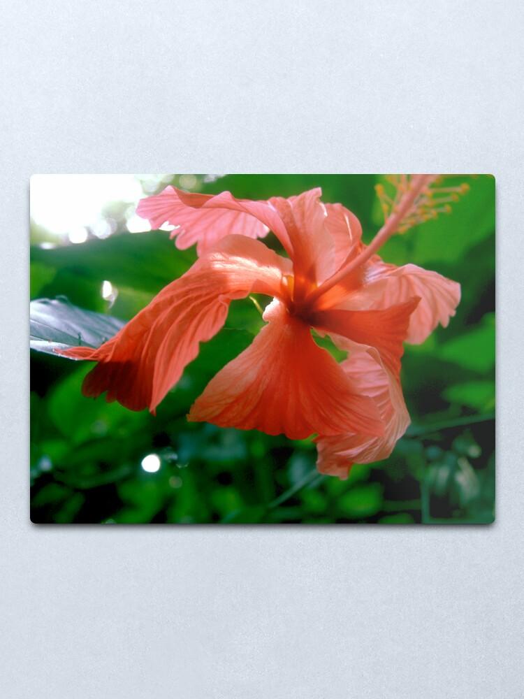 Alternate view of Red Tropical Flower Metal Print