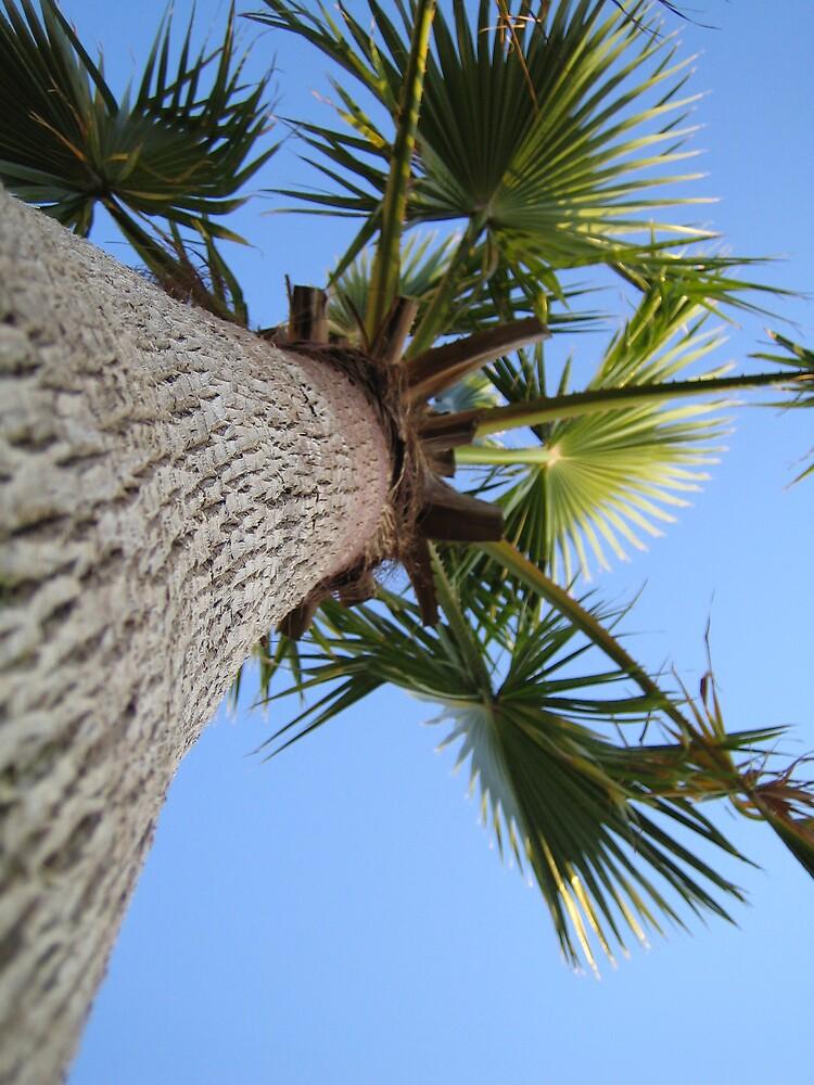 Palm Tree by hellyryan