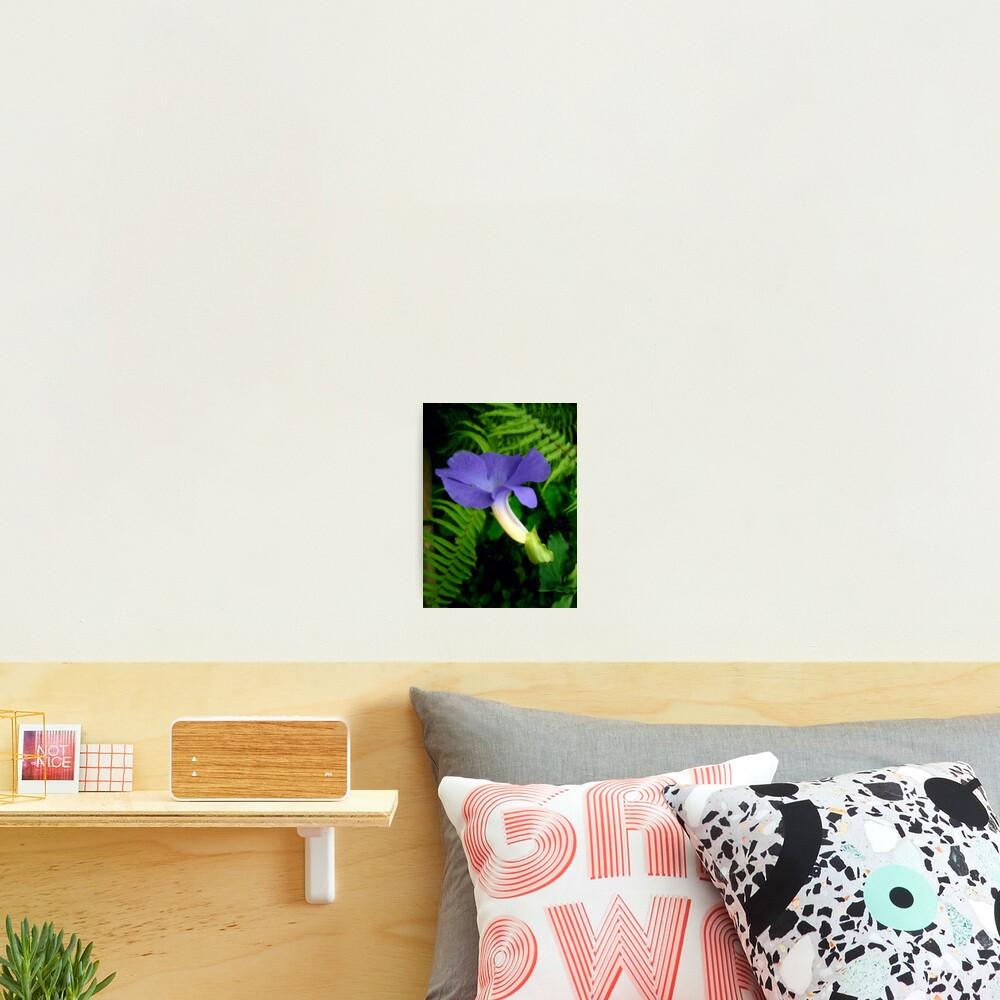 Blue Tropical Flower Photographic Print