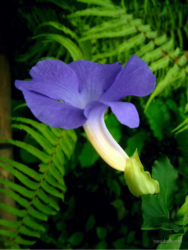 Blue Tropical Flower by newbeltane
