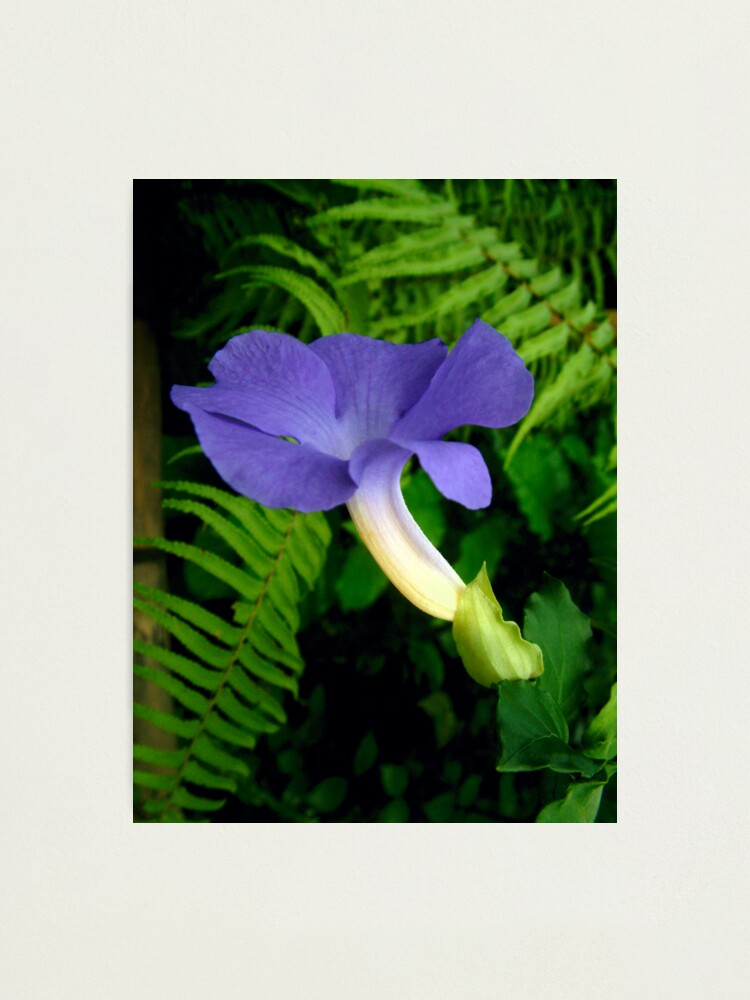 Alternate view of Blue Tropical Flower Photographic Print