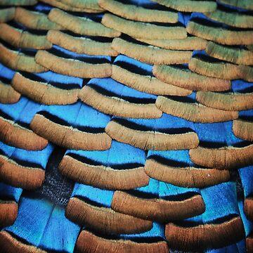 Peacock by JackCuddihy