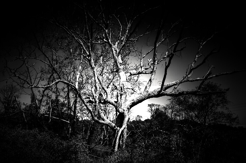 Hallow Tree by Chris Summerville