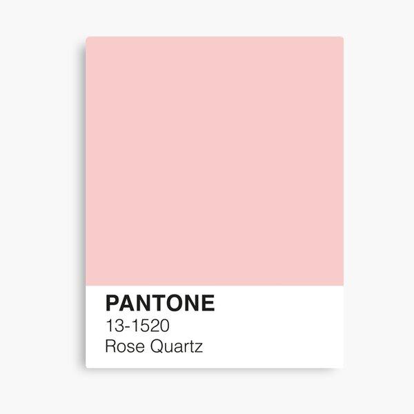 Rose Quartz Pantone Canvas Print