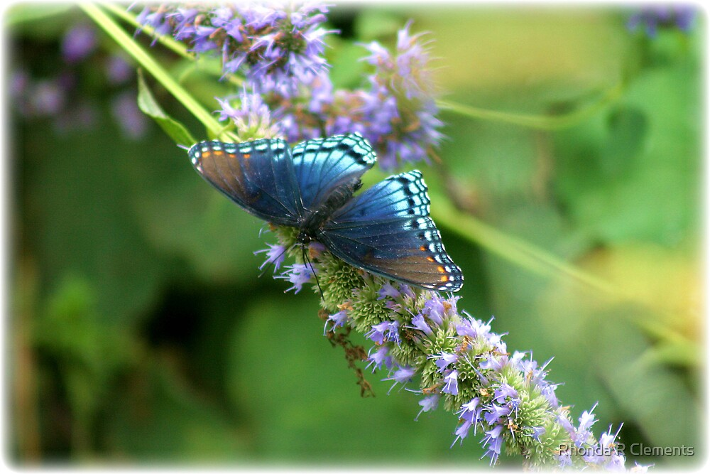 Butterfly Blues by Rhonda R Clements