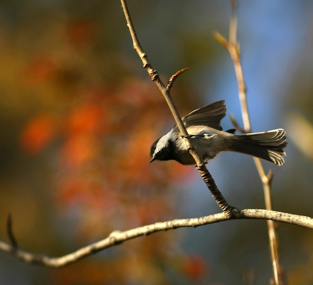 Autumn balancing act... by Normcar