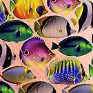 «Undersea LivIng Colors» de Paco Herrero
