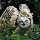 Owlet on instinct... by Normcar