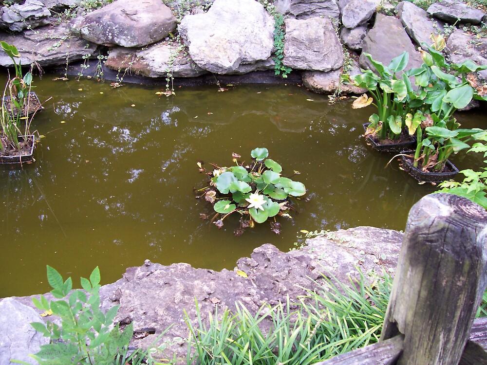 Pond at SAU by Dottie Palmer