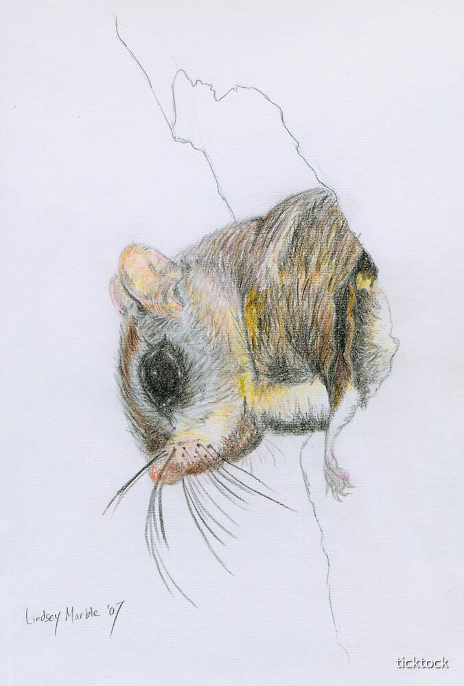 squirrel by ticktock