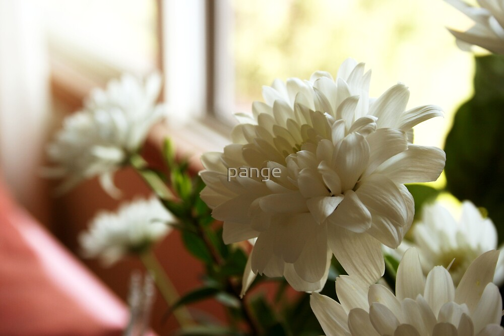 Flowers by the Window by pange