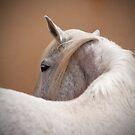 spanish horse by Mitch  McFarlane