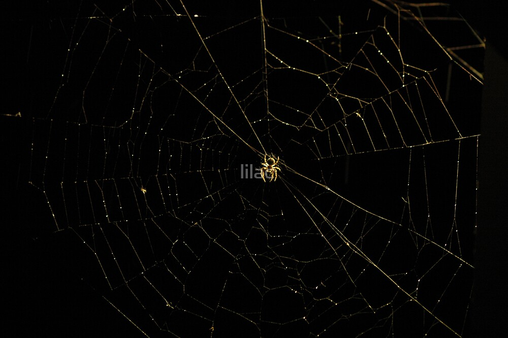 Spider in the Dark by lilac