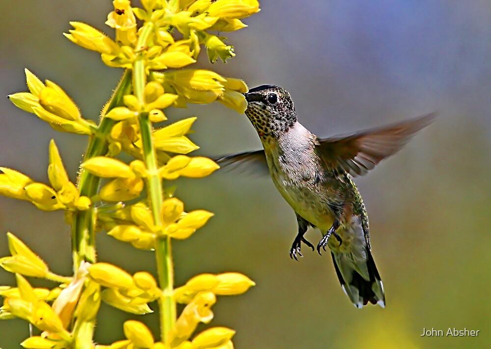 Sweet Nectar by John Absher