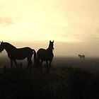 Horses in the mist by cuprum