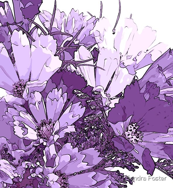 Summer Cosmos In Purple  by Sandra Foster