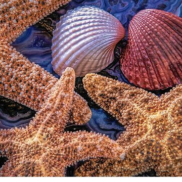 Starfish and shells by DeerPhotoArts