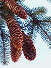 Pine Cones by FrankieCat
