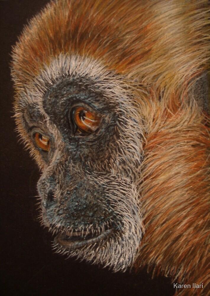 Gibbon by Karen Ilari