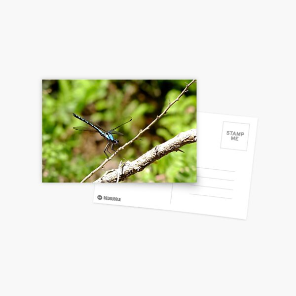 Dragonfly Resting Postcard