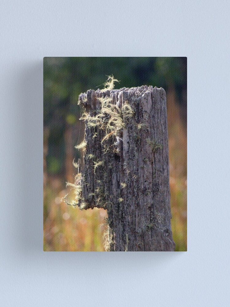 Alternate view of Abandoned Fencepost Canvas Print