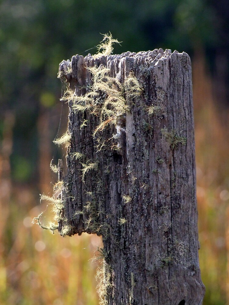 Abandoned Fencepost by theoddshot