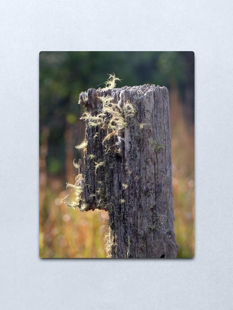 Alternate view of Abandoned Fencepost Metal Print