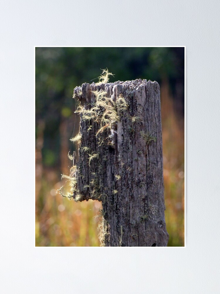 Alternate view of Abandoned Fencepost Poster