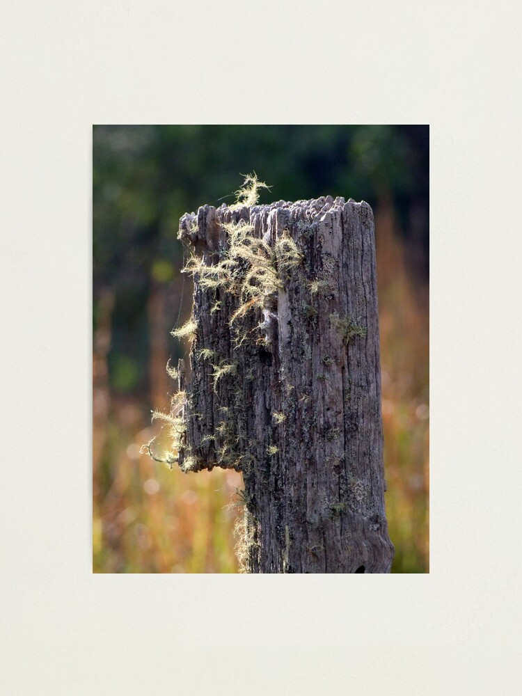 Alternate view of Abandoned Fencepost Photographic Print
