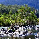Nymboida River by Trevor Farrell