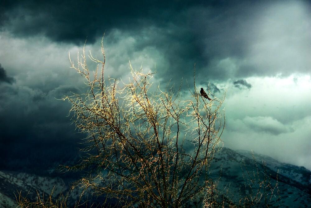 into the light of the dark black night by Rachel  McKinnie