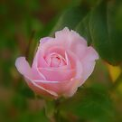 Pink by KeepsakesPhotography Michael Rowley