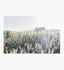 Glühende Felder Fotodruck