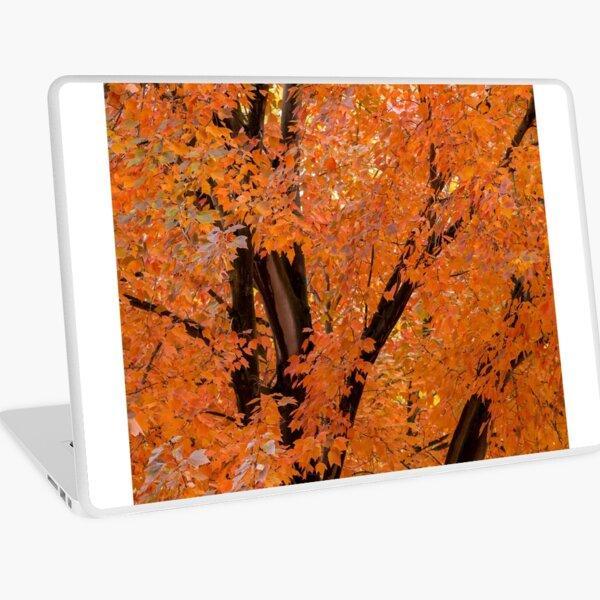Tree with Fall Foliage Laptop Skin