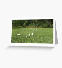 Fairy Trail of Mushrooms Greeting Card