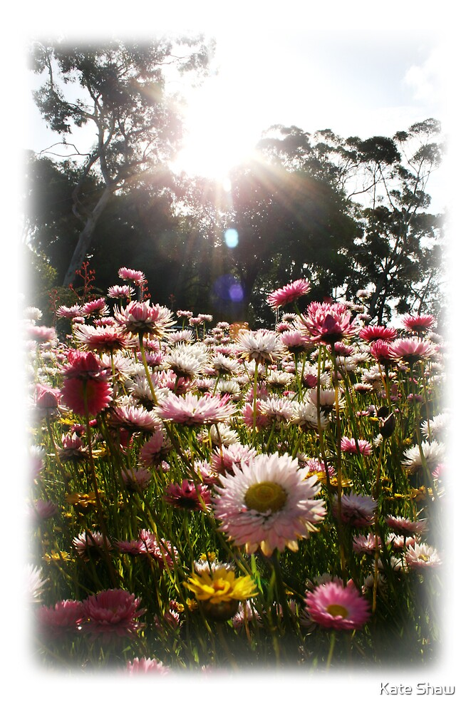 Wildflower by Kate Shaw