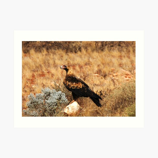 'Eagle Rock' Art Print