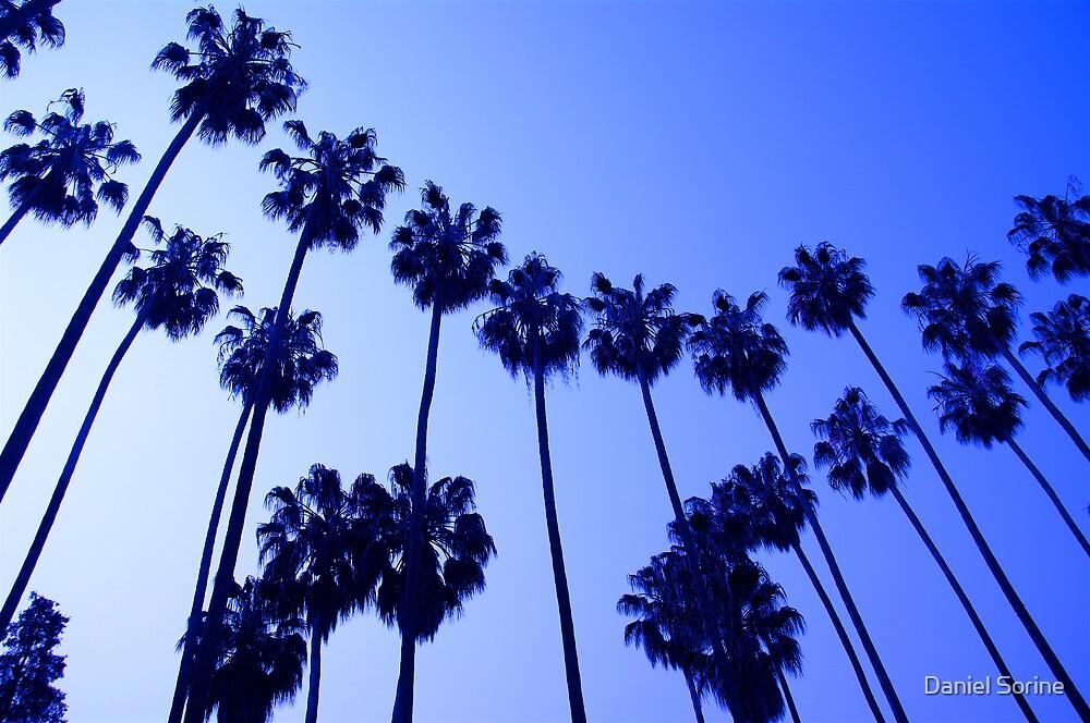 Palm Trees by Daniel Sorine