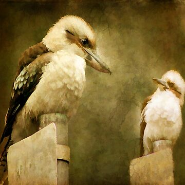 Kookaburra, Kingfisher by Margi