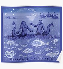 Natural History in Indigo | CreateArtHistory Poster