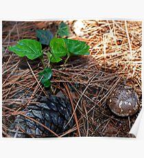 Weedy Field Still Life 1 Poster