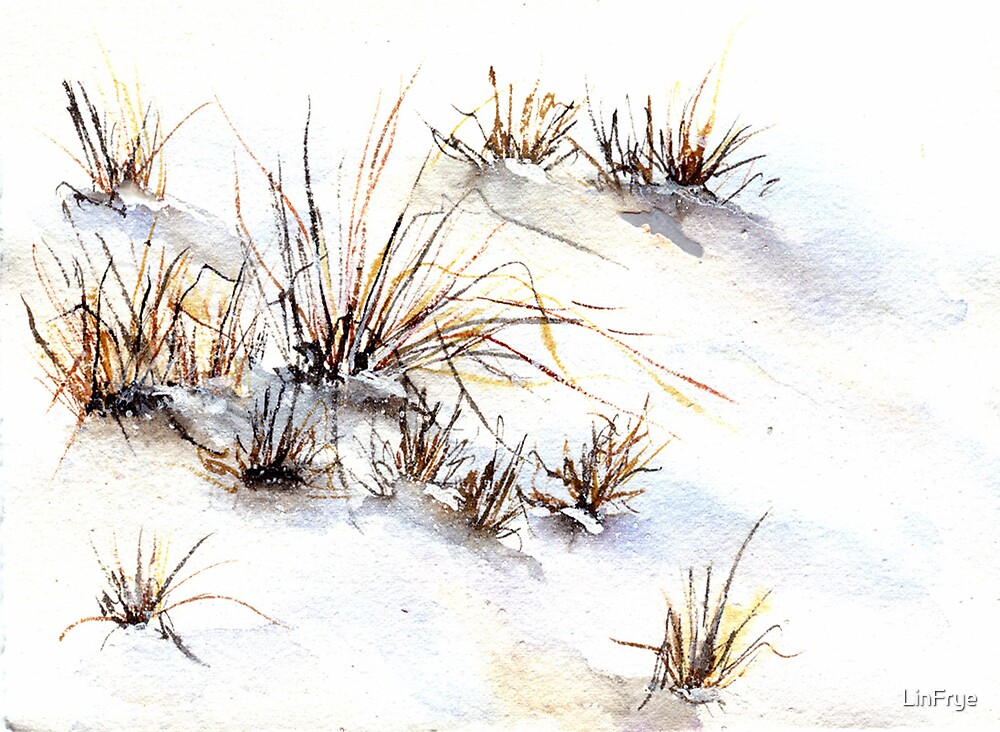 Snow and Grasses by LinFrye
