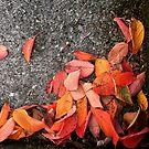 Autumn leaves by Asrais